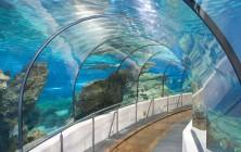 Аквариум Барселоны – подводное царство