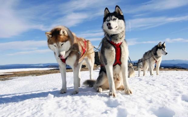 Аляска, туризм и отдых