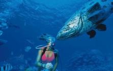 Выбор рыболовных делей и капроновых сетей