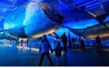 Детский туризм в Исландии музей китов в Рейкьявике