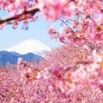 Знаете ли вы, как прекрасна Япония весной?