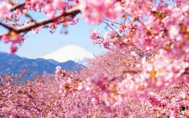 Знаете ли вы, как прекрасна Япония весной