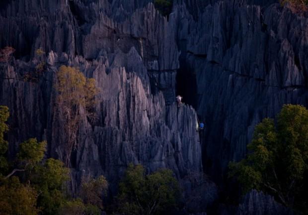 Каменный лес острова Мадагаскар