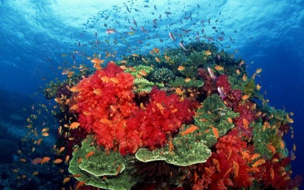 Мир кораллов