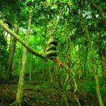 Необычные места Европы: Лес Хоя Бачу