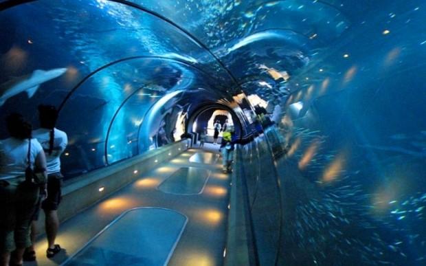 Обслуживание аквариума имени Джона Шедда
