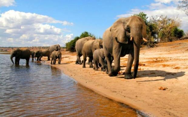 Особенности поездок в Ботсвану и Victoria Falls