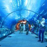 Отдых в ОАЭ: Аквариум в «Дубай Молл»