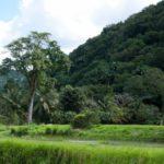 Путешествие в Конго, Пуэнт-Нуаре (6 фото)