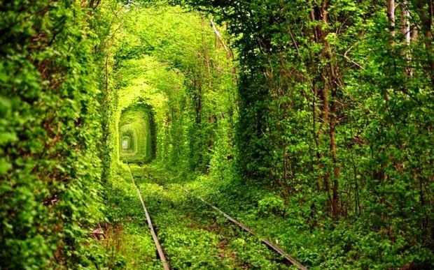 Самые великолепные леса в мире