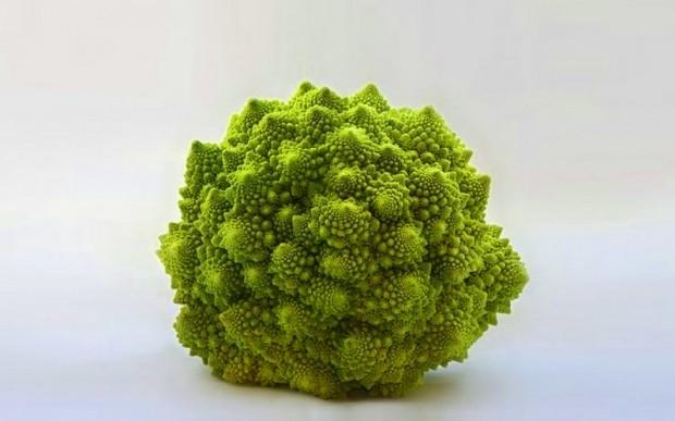 Самые красивые примеры симметрии в природе