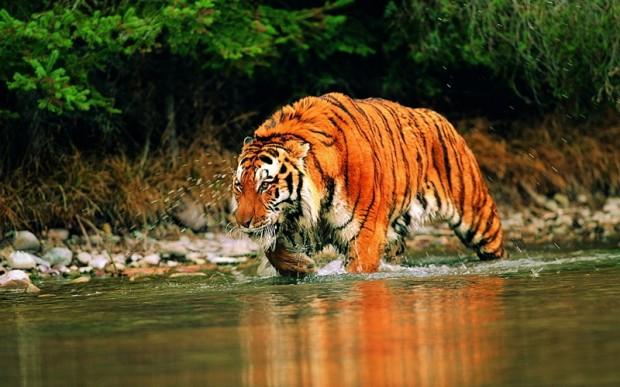 Самый сильный зверь в мире