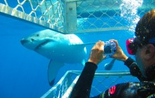 Экстремальный туризм – погружение с акулами