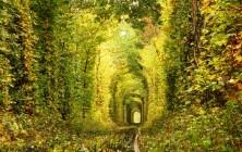 Тоннель любви в украинском лесу