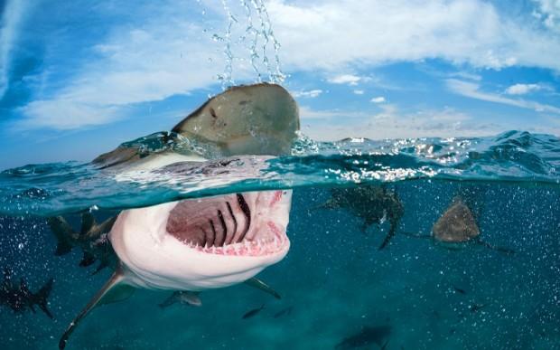 Дайвинг с китовыми акулами