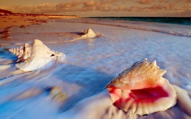 Дары моря – морские раковины
