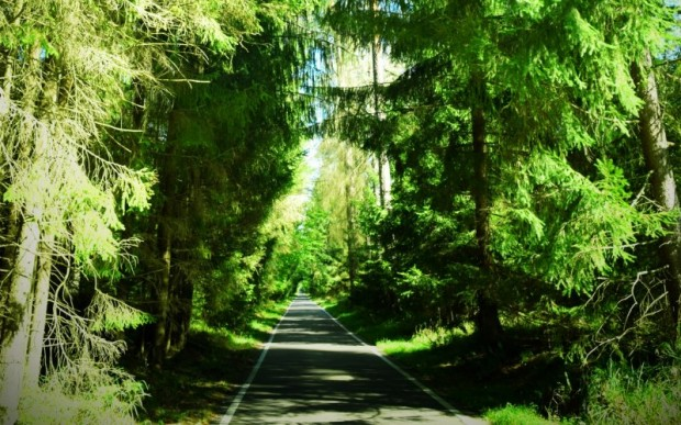 Интересные места Белоруссии: Беловежская пуща