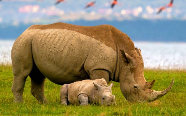 Кения уникальна, путешествие и знакомство
