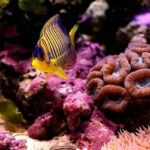 Мир кораллов (20 фото)