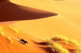 Начать путешествие по Африке