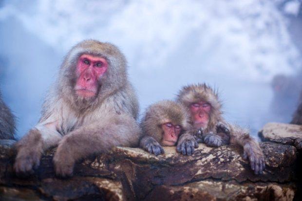 Парк снежных обезьян – Джигокудани