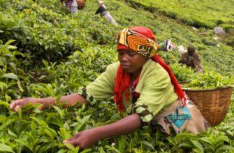 Руанда: интересные места и достопримечательности