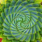 Самые красивые примеры симметрии в природе (11 фото)