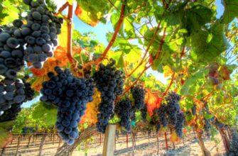 Три сорта испанских вин, которые стоит попробовать