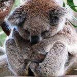 Неизведанная Австралия